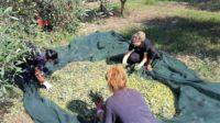 Agriturismo La Petrosa (15)