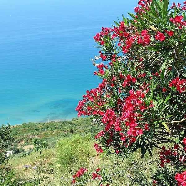 Küste Nähe Acciaroli (3)