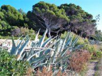 Punta Licosa (8)
