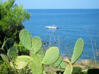 Punta Licosa (9)