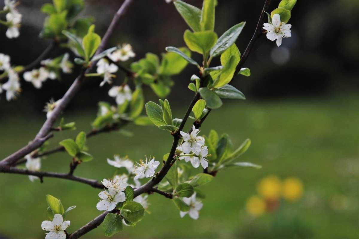 spring-4123594_1280
